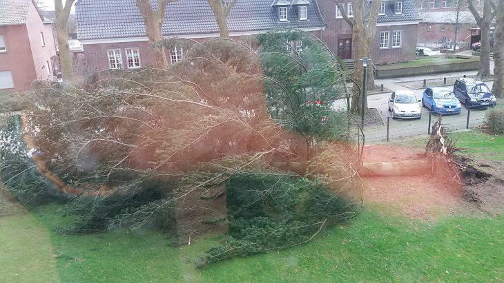 Am Finanzamt: Baum horizontal