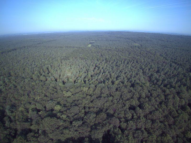 Blick nach Westen: Sattes Grün