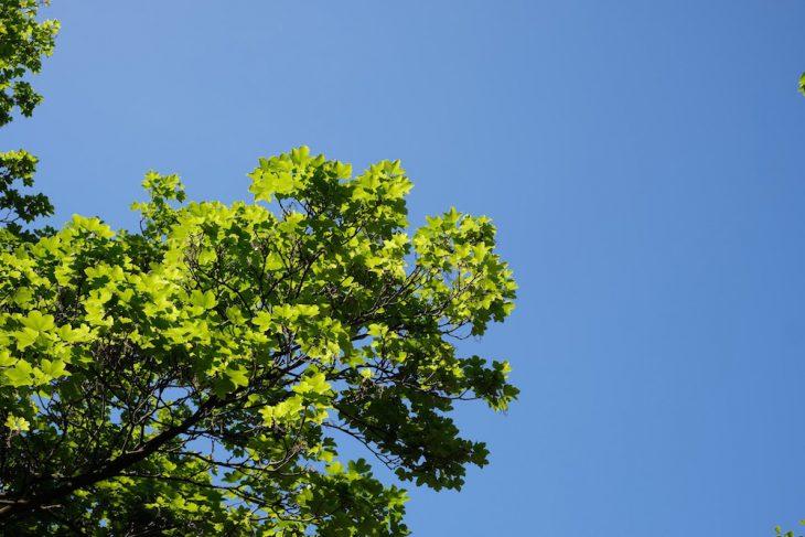 Blau war gestern, Grün ist heute: Symbolfoto für das bevorstehende Wochenende