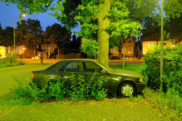 Die Natur erobert das Auto zurück
