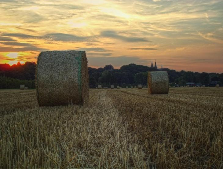 Für Technokraten nur Biomasse, für kleveblog ein Sonntagsbild mit Symbolcharakter (Foto © C. Flock)