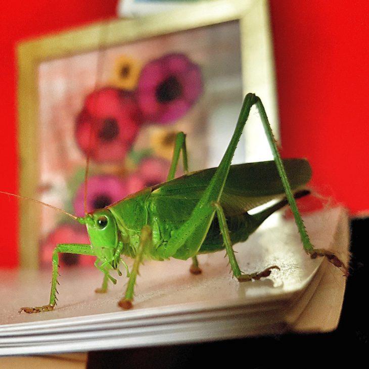 Im Presswesen herrschen raue Sitten: Heuschrecken greifen nach Traditionsblättern (Foto: C. Philipp)
