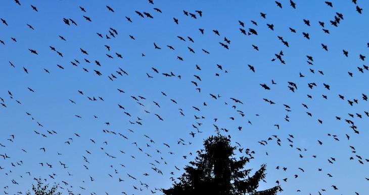 Ornithologische Betrachtungen von: C. Philipp