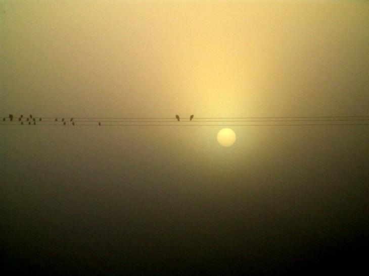 Morgen Abend treffe ich einen Komponisten, den frage ich mal — wenn man sich die Vögel als Noten vorstellt — was die Viecher auf der Stromleitung als Musikstück ergeben, und ob es eher nach Nikolai Andrejewitsch Rimski-Korsakow oder Dimitri Schostakjowitsch klingt. Ah, diese russischen Komponistennamen! (Foto: Claudia Philipp)