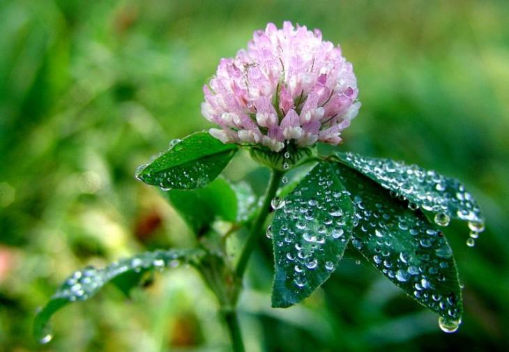 Kraft liegt in der kleinsten Blüte (Foto: Claudia Philipp)