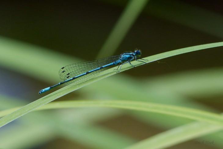 Blauer Strich in der Landschaft
