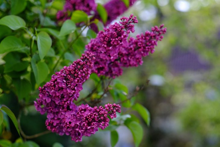 Blütenorgie aus Nachbars Garten: Erster Versuch