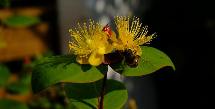 Bienäres System