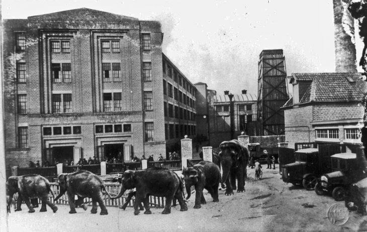 Berühmte Fotomontage von Ewald Steiger: Elefanten vor dem Hoffmann-Werksgebäude (Foto: Stadtarchiv Kleve)