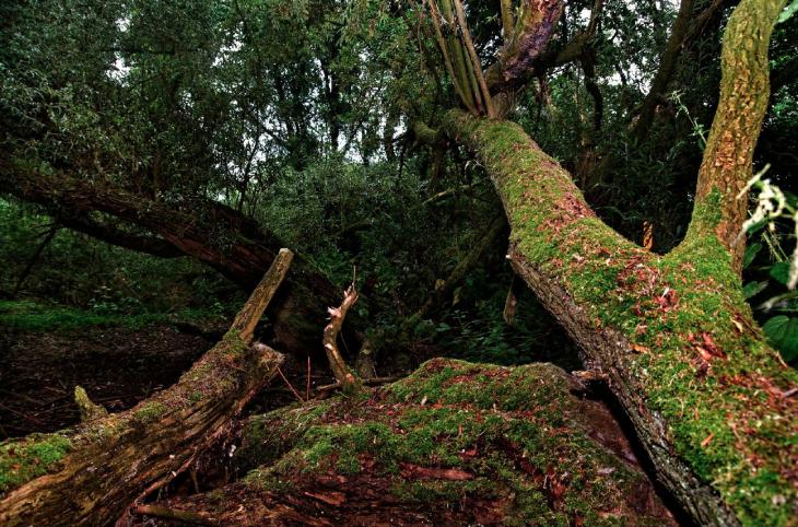 Der Dschungel kann auch vor der Haustür liegen, oder sogar im Kopf (Foto © Kleinendonk)