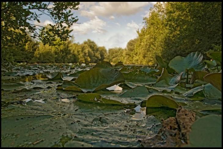 Im Namen der Seerose: Naturpark Kellen (Foto: Kleinendonk)