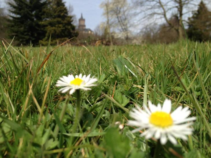 Frühling, du bist's (Foto © M. Cox)