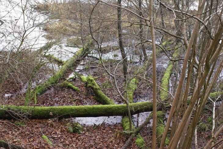 Verspielte Natur (an der Wetering/am Kermisdahl, ja was denn eigentlich?)