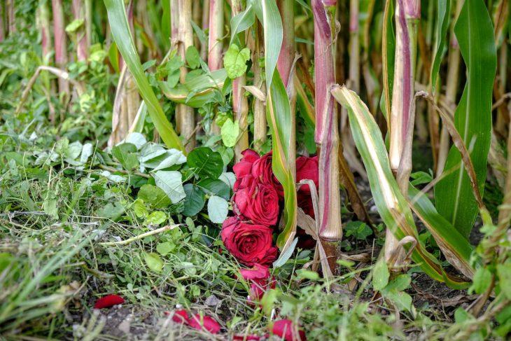 Wohl kaum eine Liebeserklärung an den Mais (bei Düffelward)