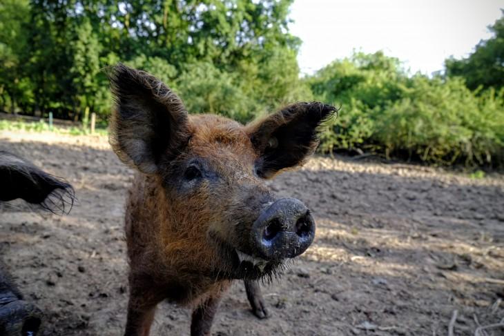 """Ist es ein Zufall, dass der Besitzer dieses Tier """"Frau Schiffer"""" genannt hat?"""