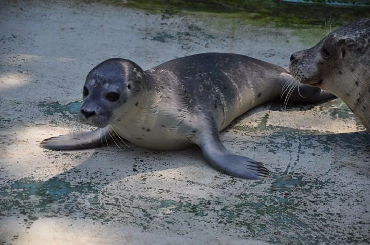 Name gesucht! (Foto: © Tierpark Kleve)
