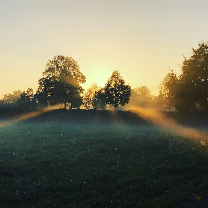 Schon heute an morgen denken: Bäume bei Burg Ranzow im Licht der aufgehenden Sonne (Foto: Thorsten Rintelen)