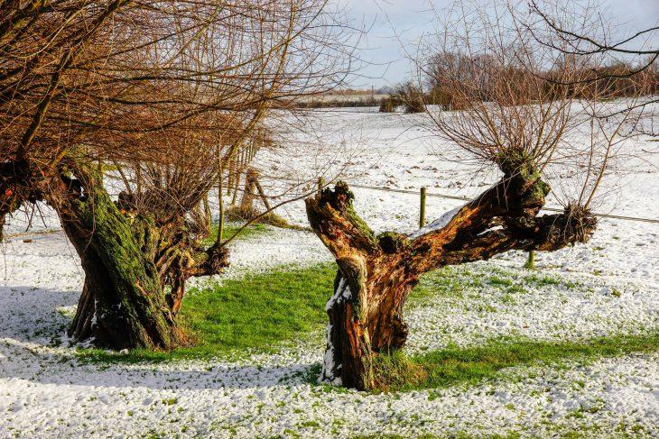 Wenn ein Bild auszudrücken vermag, dass der niederrheinische Winter den größtmöglichen Gegensatz zum sibirischen bildet, dann diese Aufnahme zweier Kopfweiden von Thomas Velten