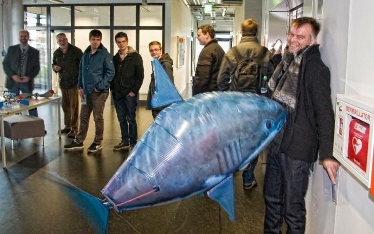 Blauer Hai auf Kollisionskurs (Foto © Udo Kleinendonk)