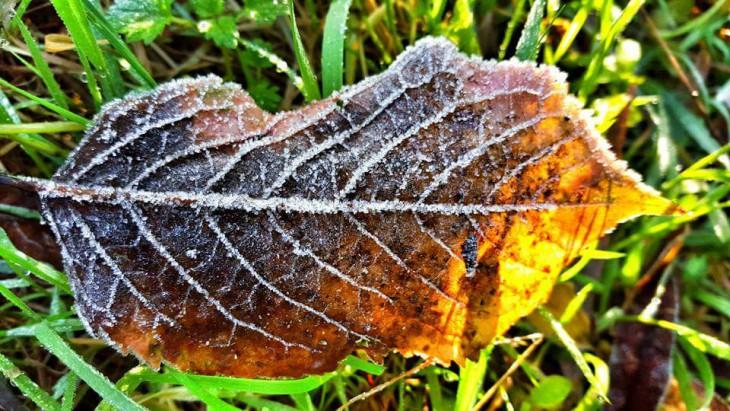 Frozen (Foto © Claudia Philipp)